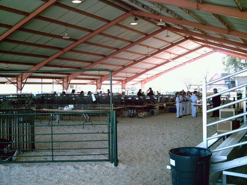 The Angelus Ranus 4-H 20th Annual Youth Poultry Show
