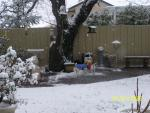 Andi, Barney, and Gus enjoying the snow in Angels Oaks